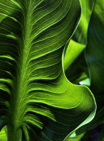 Essence of a Green Leaf